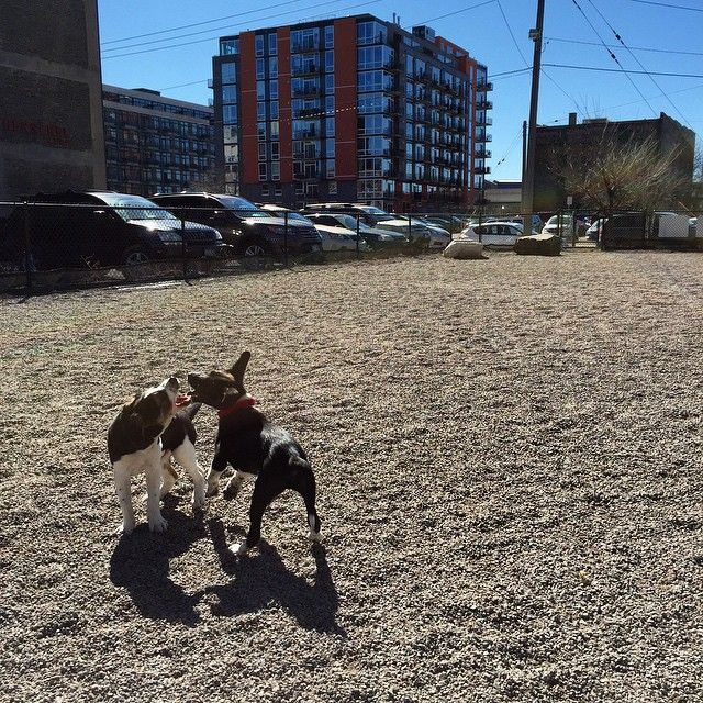 Instagram image by moderndogs_mn